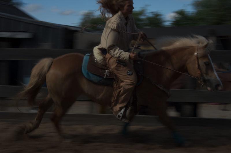 daisy_horse2_WEB